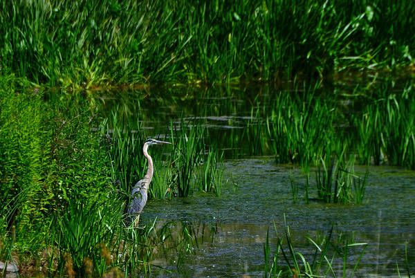 Photograph - The Heron by Mark Fuller