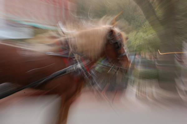 Photograph - The Horse by Randy J Heath