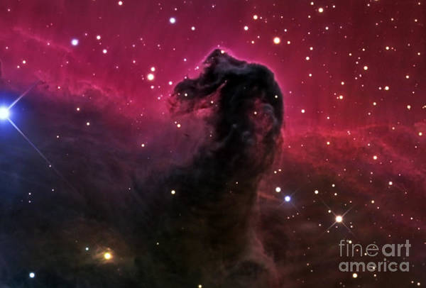 Photograph - The Horsehead Nebula by R Jay GaBany
