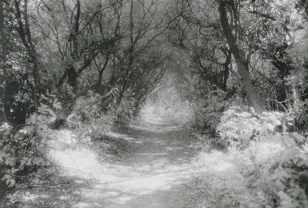 Dim Photograph - The Icknield Way by Simon Marsden