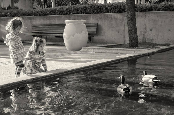 Ducks Photograph - The Innocence Of Youth by Larry Marshall
