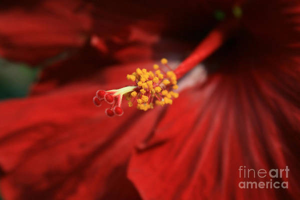 Photograph - The Intoxication Of Love by Sharon Mau