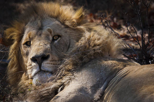 Photograph - The King by Andy Bitterer