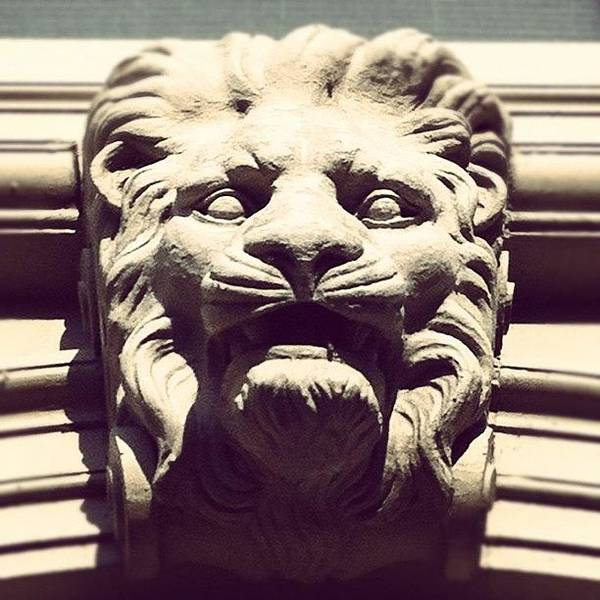 Wall Art - Photograph - The #lion Sleeps Tonight by Jenna Luehrsen