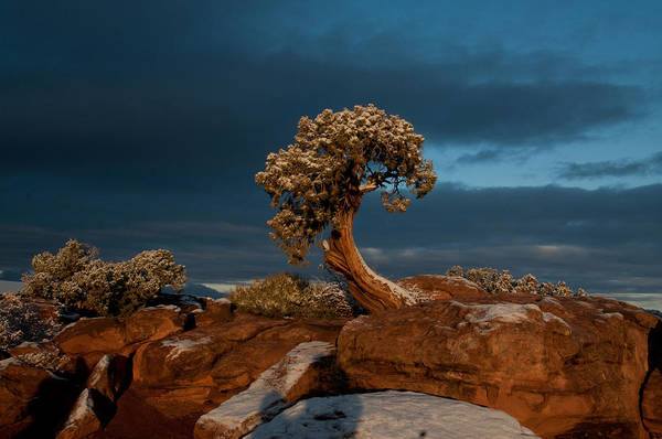 Photograph - The Lonely Juniper by Craig Ratcliffe