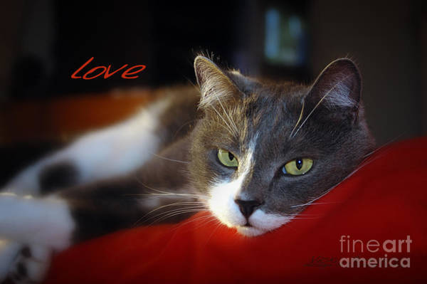 Photograph - The Look Of Love by Vicki Ferrari