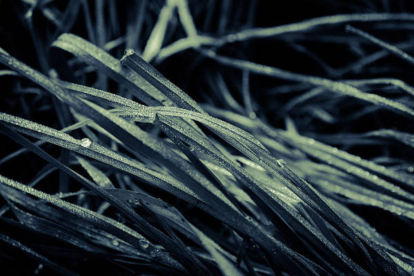Photograph - The Lying Grass by Andreas Levi