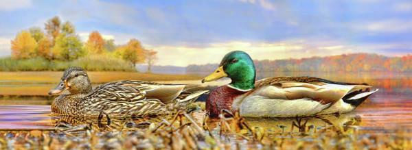 Photograph - The Mallard And The Drake by Steven Llorca