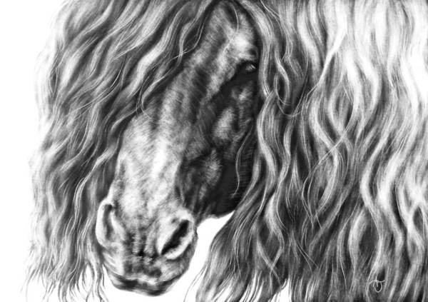 Friesian Drawing - The Mane Thing by  Ann Jeffree
