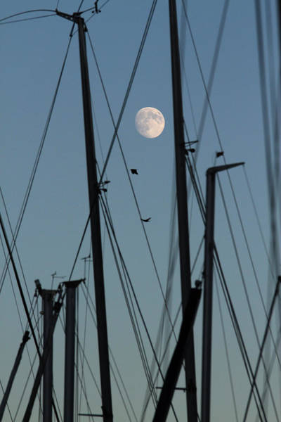Rigging Photograph - The Masts Of Sailboats, Dawn, Moon In Background by Gerhard Fitzthum