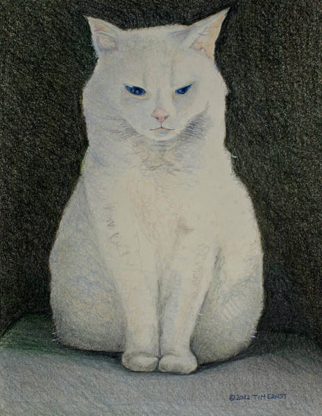 Drawing - The Meditating Cat by Tim Ernst