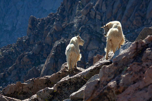 Photograph - The Mountaineers by Jim Garrison