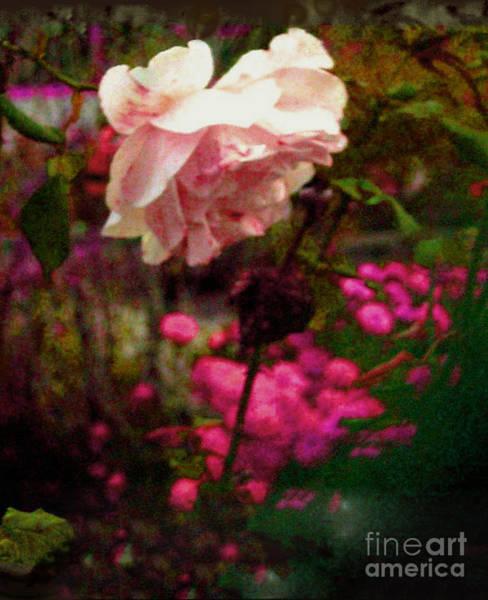 Ra Digital Art - The Mystical Rose by Rayofra Ra