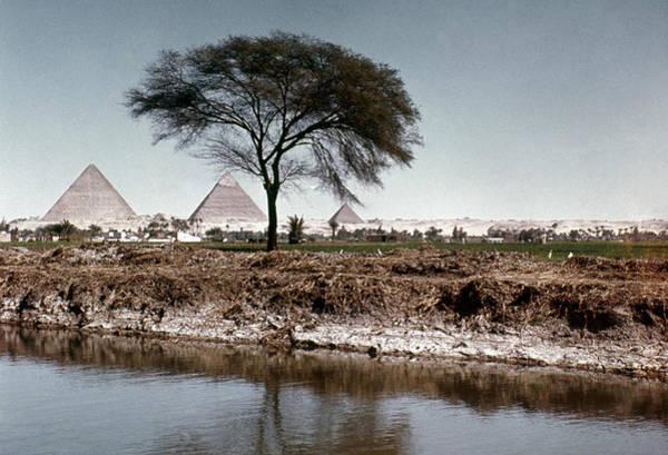 Photograph - The Nile & Pyramids At Giza by Granger