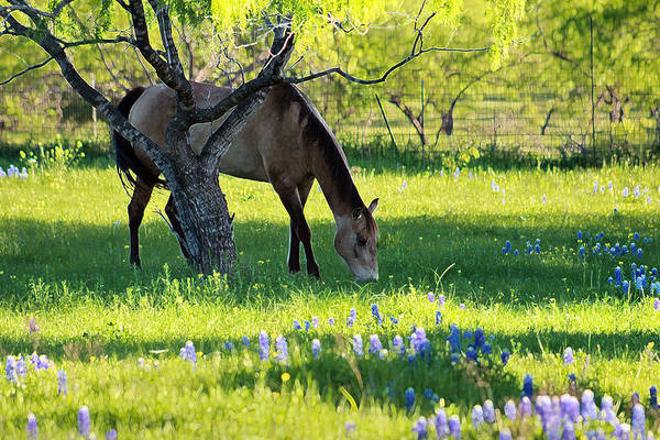 Photograph - The Old Grey Mare by Elizabeth Hart