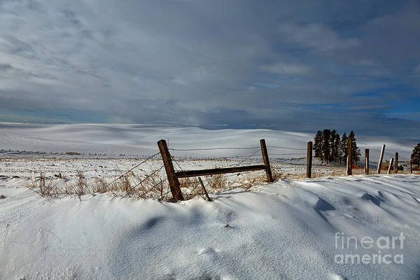 Photograph - The Palouse - Late Winter by Beve Brown-Clark Photography