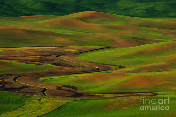 Photograph - The Palouse by Beve Brown-Clark Photography