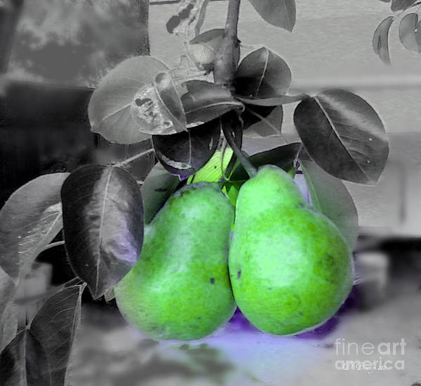 Photograph - The Pears by Donna Bentley