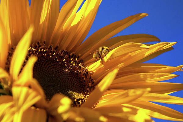 Photograph - The Pollenator by Jim Garrison