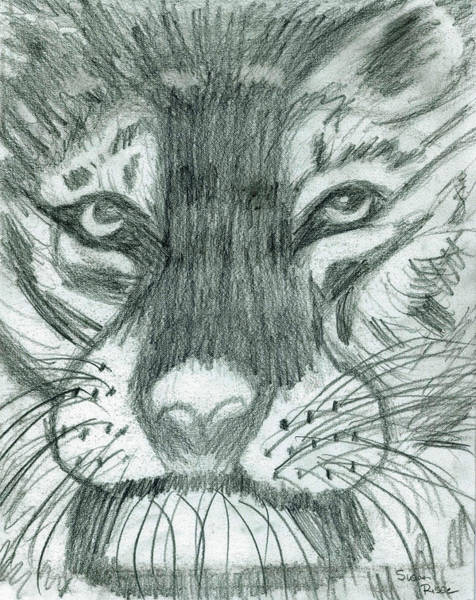 The Puma Art Print by Susan Risse