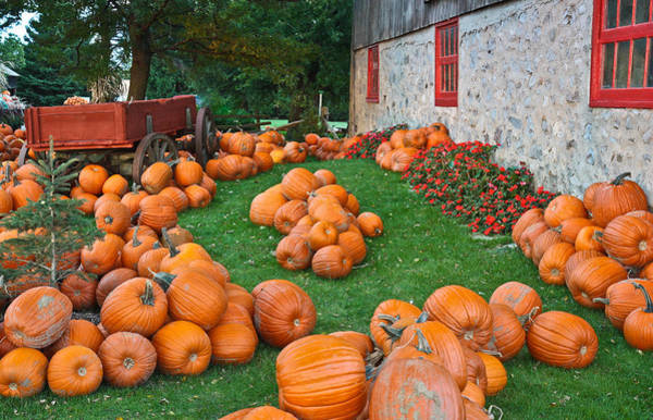 Photograph - The Pumpkin Farm by Nick Mares