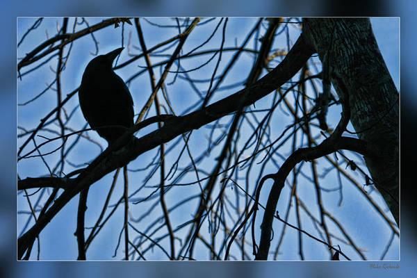 Photograph - The Raven by Blake Richards