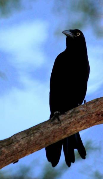 Wall Art - Photograph - The Raven by Lisa Scott