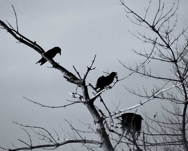 Bird In Tree Photograph - The Raven Tree by Susan Capuano
