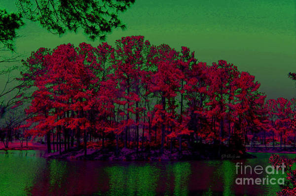 Photograph - The Red Forest by Donna Bentley