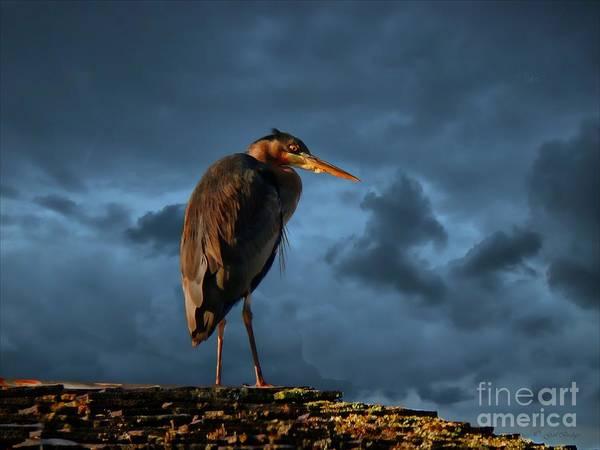 Heron Mixed Media - The Rooftop Watcher by Gail Bridger