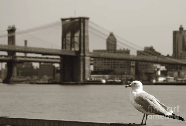 Photograph - The Seagull Of The Brooklyn Bridge by RicardMN Photography