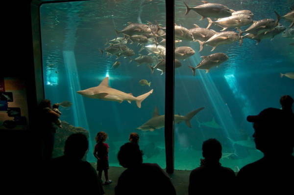 Photograph - The Shark Tank by Margaret Pitcher