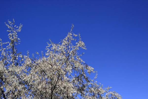 Photograph - The Sky Is Blue by Dragan Kudjerski