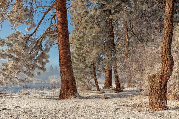 Photograph - The Smell Of Pines II by Beve Brown-Clark Photography