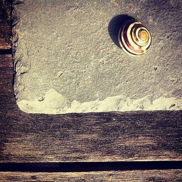 Still Life Wall Art - Photograph - The Snail by Nic Squirrell