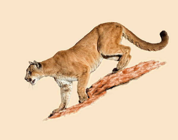 Mountain Lion Digital Art - The Sneaky Approach by Dewain Maney