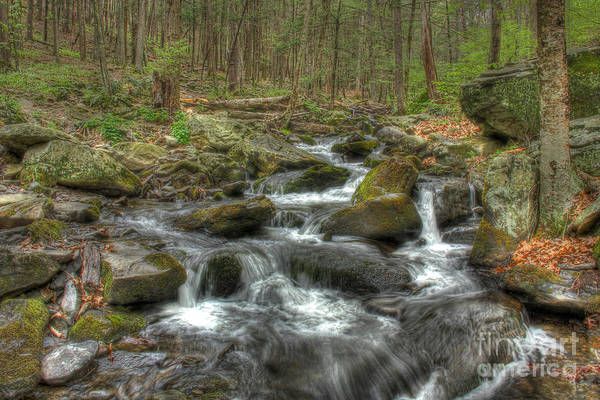 Wall Art - Photograph - The Stream by Lee Dos Santos