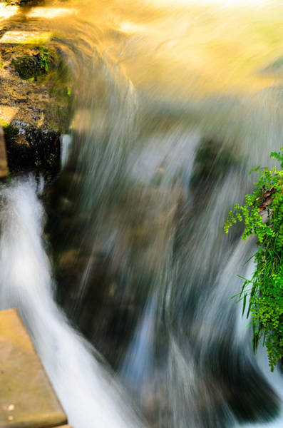 Photograph - The Stream by Michael Goyberg