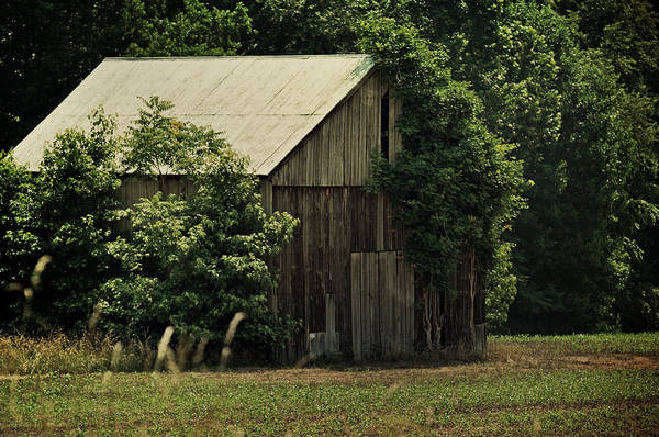 Photograph - The Summer Barn by Rebecca Sherman