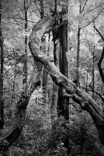 Photograph - The Tango by Beth Akerman