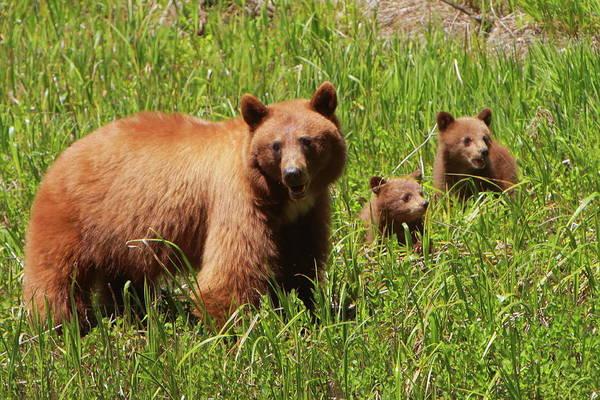 Wall Art - Photograph - The Three Bears by Bruce J Robinson