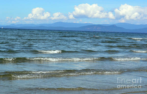 Photograph - The Tide Was High by Traci Cottingham