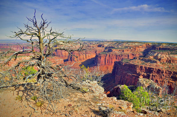 Photograph - The Tree And The Canyon by Tara Turner