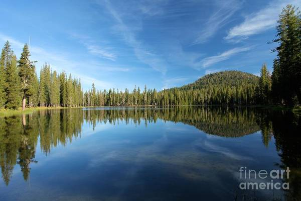Photograph - The Tree Line by Adam Jewell