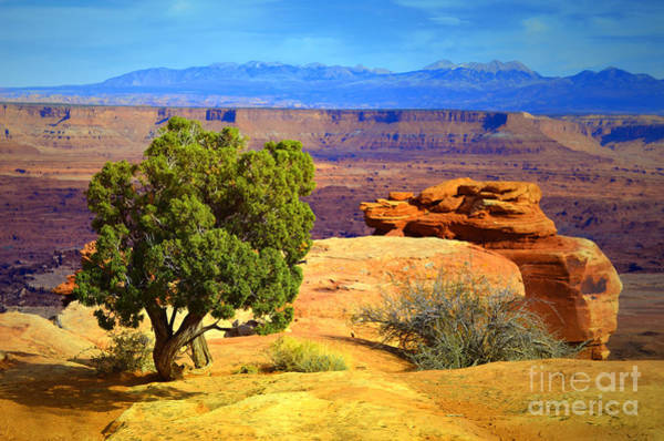 Photograph - The Tree The Canyon And The Mountains by Tara Turner