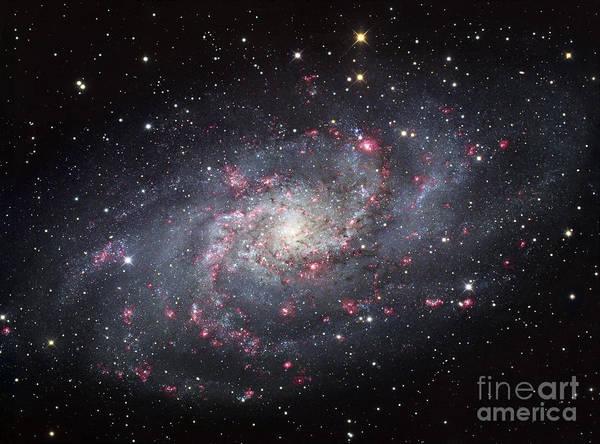 Photograph - The Triangulum Galaxy by Robert Gendler