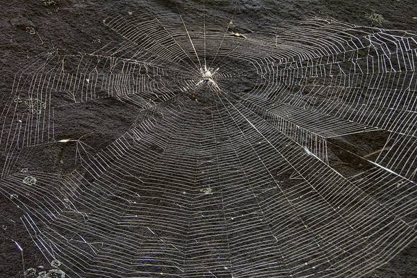 Wall Art - Photograph - The Web  by Douglas Barnard