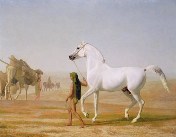 Reins Painting - The Wellesley Grey Arabian Led Through The Desert by Jacques-Laurent Agasse
