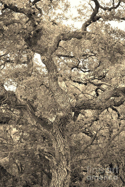 Photograph - The Wicked Tree by Donna Greene
