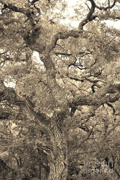 The Wicked Tree Art Print